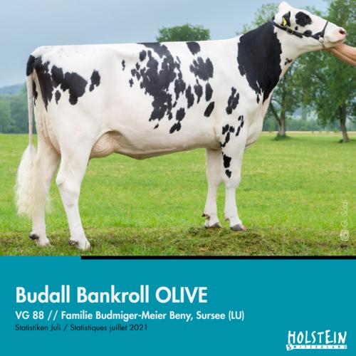 Budall Bankroll OLIVE